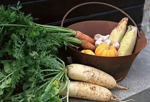 秋季保护肠胃的食材大全
